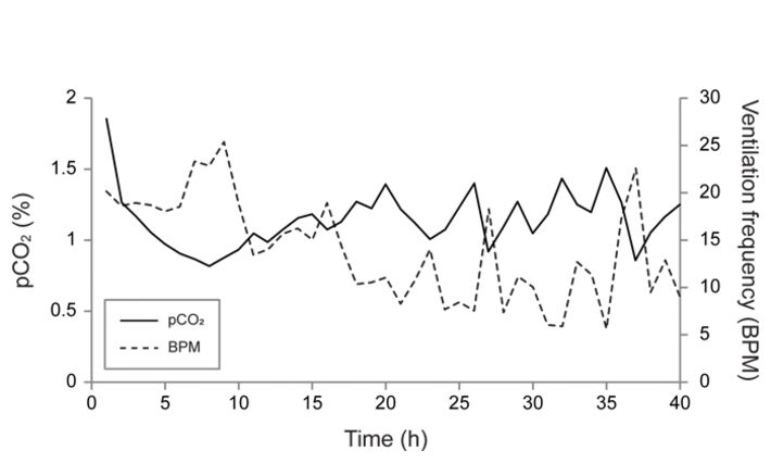 Graph of pCO2 and ventilation frequency of Anax junius nymphs