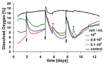 DO kinetics of 3D chondrocyte cultures in 24-well OxoDishes over 13-day cultivation period