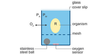 Schematic illustration of a polystyrene-based well used for aquatic respirometry