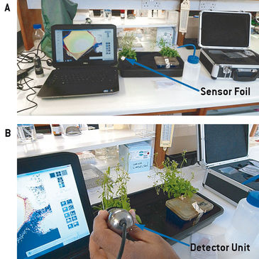 Set-up for O2 measurements on Arabidopsis leaves infected with Pseudomonas
