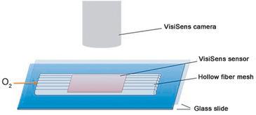 Illustration of set-up for O2 imaging