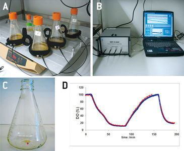 Set-up of optical monitoring in insect cells with O2 sensor inside shake flask