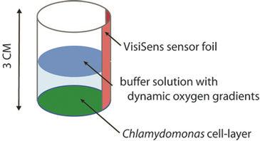 Illustration of test vessel set-up for O2 gradient determination