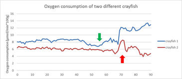 Graph showing O2 consumption of two different crayfish