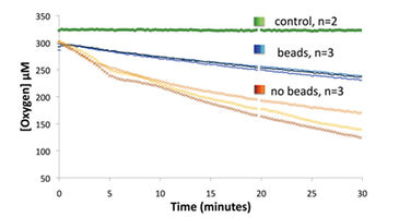 Pseudomonasstrain HF3 O2 consumption during balanced growth