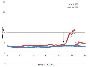 Graph of arterial and venous pO2 during active muscle perfusion with heparinized autologous blood
