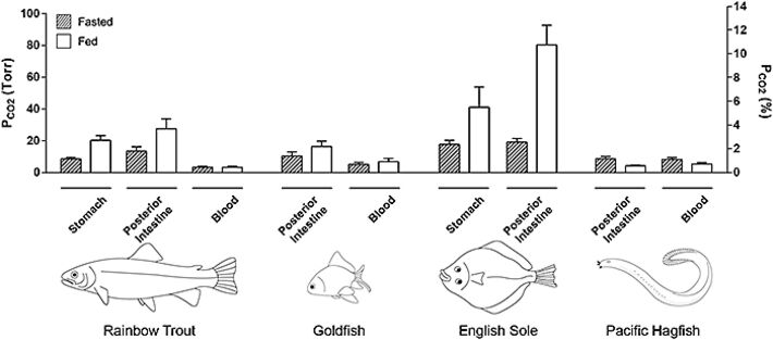 pCO2 measurements in digestive tract of different fish species