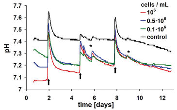 pH kinetics of 3D chondrocyte cultures in HydroDish over 13-day cultivation period