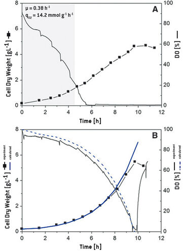 Growth and O2 consumption of C. glutamicum, comparison of predicted and experimental data