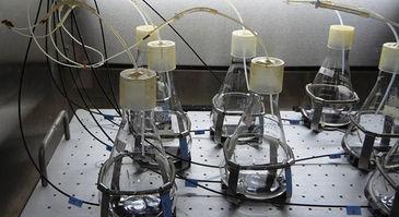 Set-up of shake flasks above CFG inside shaker