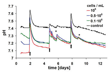 pH monitoring with HydroDishes in 3D chondrocyte culture with different start concentrations