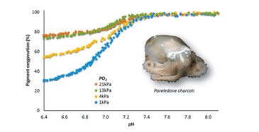 High resolution O2 equilibrium curves of Arctic octopod haemolymph from high to low pH