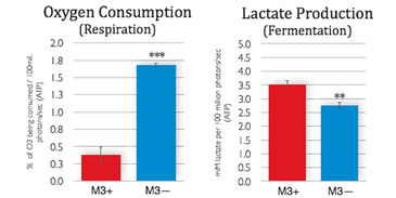 O2 consumption and lactate production of infected and non-infected M3 cells