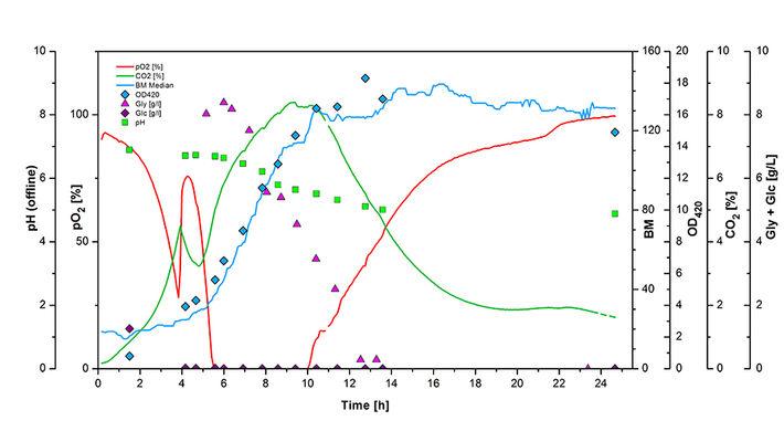 Graph of diauxic E. coli growth