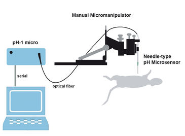Schematic illustration of monitoring tumor microenvironments in anaesthetized rats