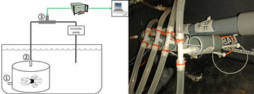 Illustration and picture of experimental set-up for monitoring O2 consumption of crayfish