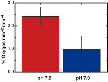 Percent O2 change of coral spat during low or ambient pH exposure
