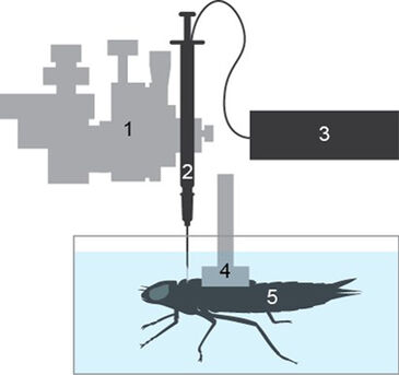 Schematic to the set-up used to monitor the internal pCO2 of dragonfly nymphs