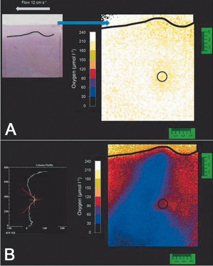 Sensor foil and measured O2 distribution around burried tar ball