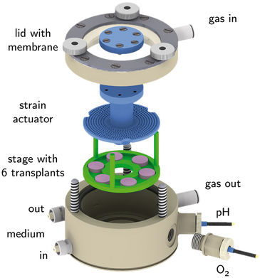 Cartilage bioreactor with sensor adapters for optical O2 & pH monitoring