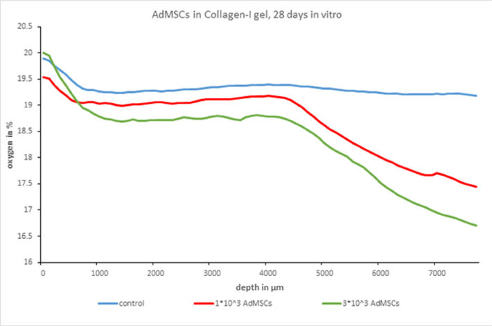 O2 gradients in collagen-1 gels after 28 days in culture