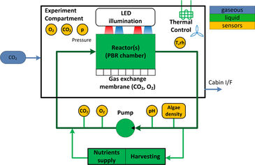 Diagram of photobioreactor experiment