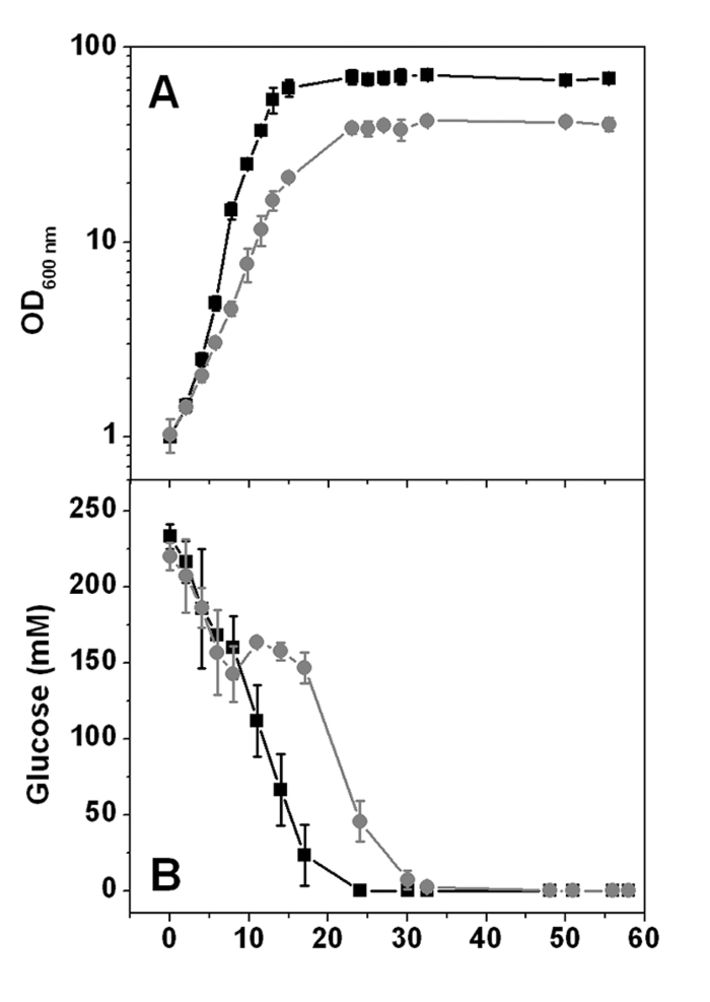 Comparison of growth & glucose consumption in C. glut. wild type and ΔF1F0 mutant