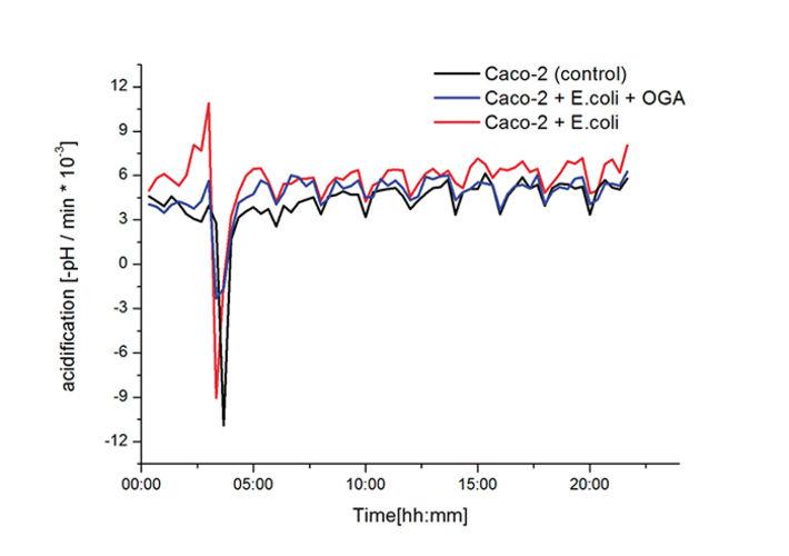 Acidification rates of Caco-2 unconfronted and confronted with E.coli or E. coli+OGA