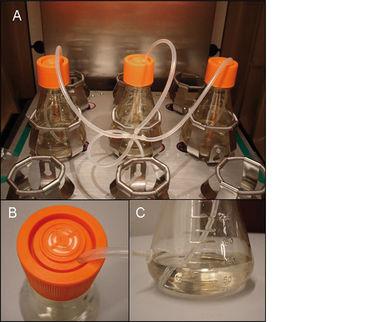 Experimental set-up for kLa determination in shake flasks