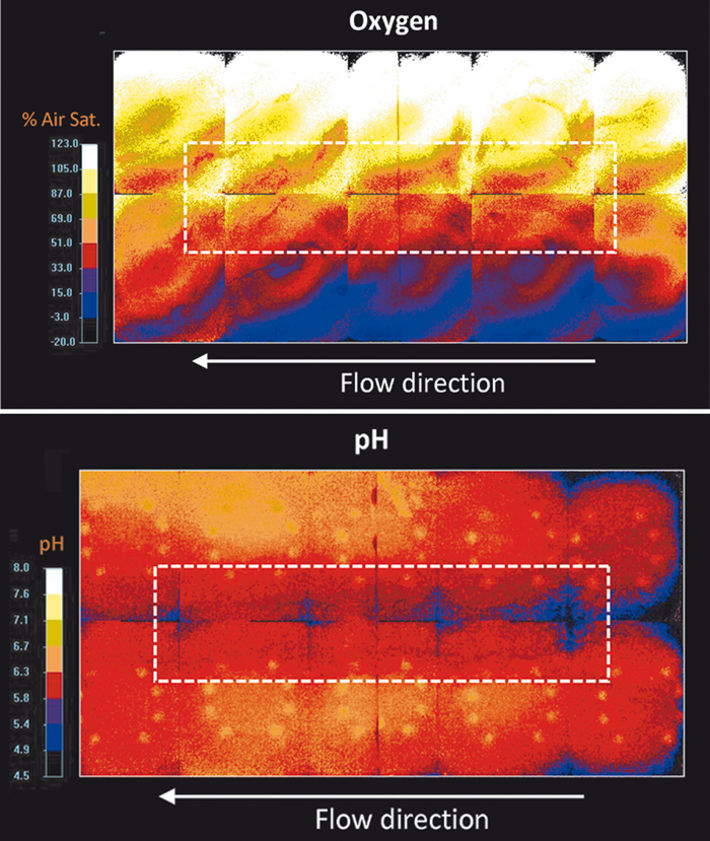 O2 & pH distributions in region of coarse-material inclusion