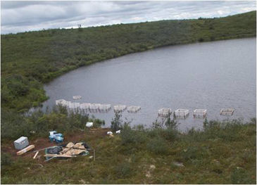 Mesocosm set-up in tundra lake of Mackenzie Delta