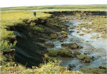 Thermokarst slumping in tundra lake at Mackenzie Delta