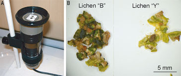 Experimental set-up for O2 imaging in lichen thallus
