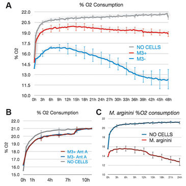 O2 consumption of infected and non-infected M3 cells