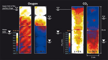 2D distribution of O2 and CO2 in diffusion cell experiment