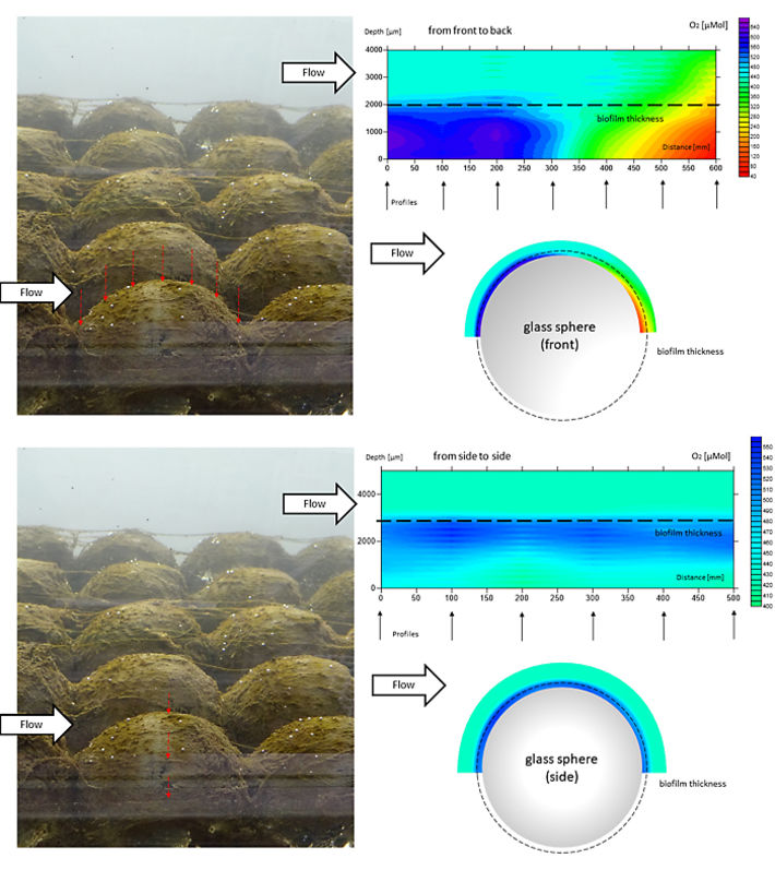 2D contour plot and profiling positions in biofilm on top of inert glass bead