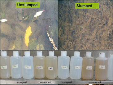 Flasks with lake water comparing unaffected and affected lakes