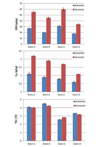 Comparison of four S. cerevisiae strains