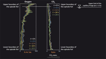 Vertical distribution of O2 & CO2 in diffusion cell experiment