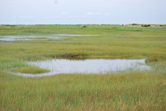 Salt marsh pond in northeastern USA